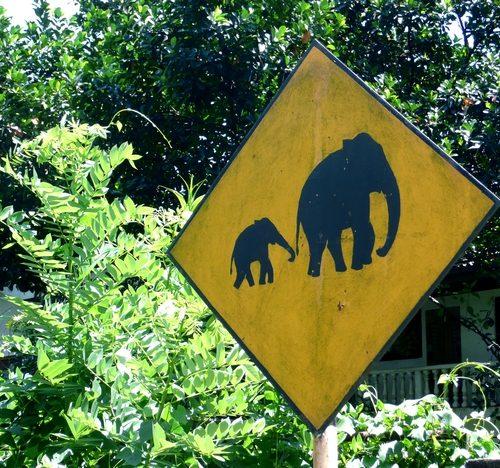 voyage-srilanka_voyage_sri_lanka_panneau_attention_elephants