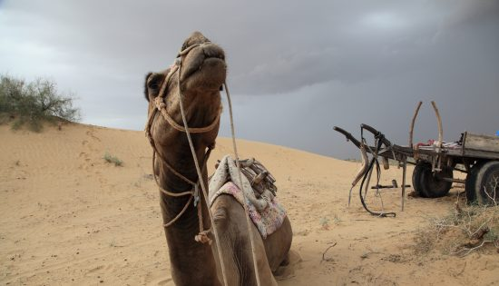 Desert Safari Sita