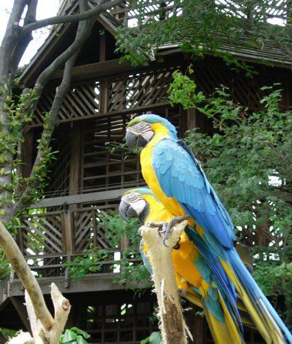 equateur-perroquet