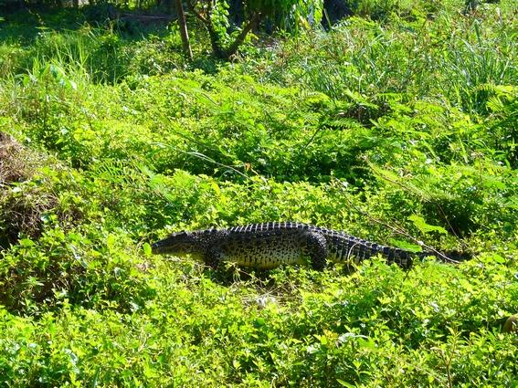 guama, cuba, ferme aux crocodiles