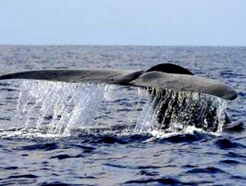voyage-srilanka_observation_baleine_bleue_voyage_sri_lanka