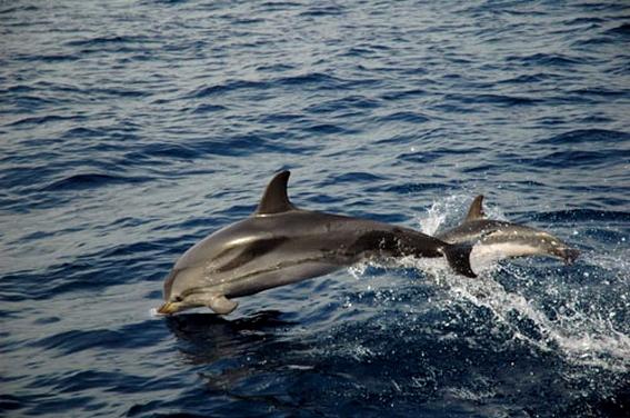 dauphins sri lanka