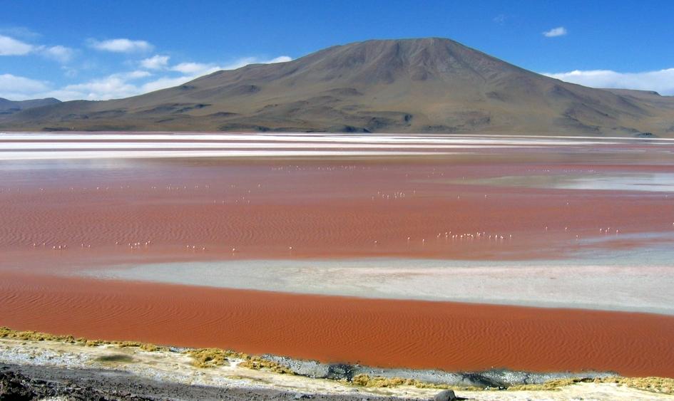 La Laguna Colorada dans la réserve Eduardo Avaroa, Sud Lipez