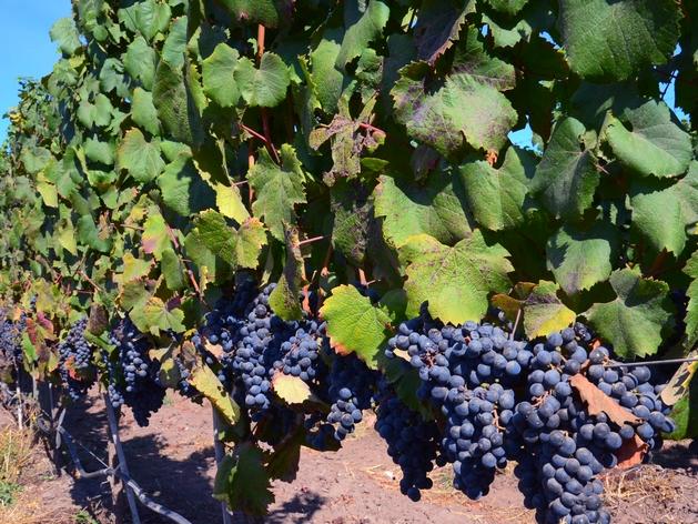 voyage chili, vallée de colchagua, route des vins