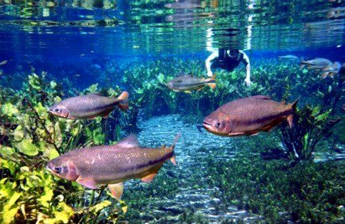 voyage-bresil-bonito-aguas-transparentes