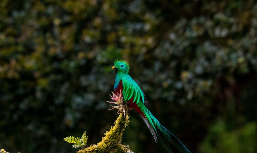 COSTARICA_Quetzal_UNSPLASHzdenek-machacek-1409958