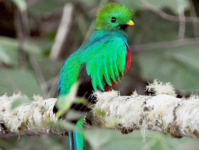 voyage-costa-rica-oiseau-quetzal