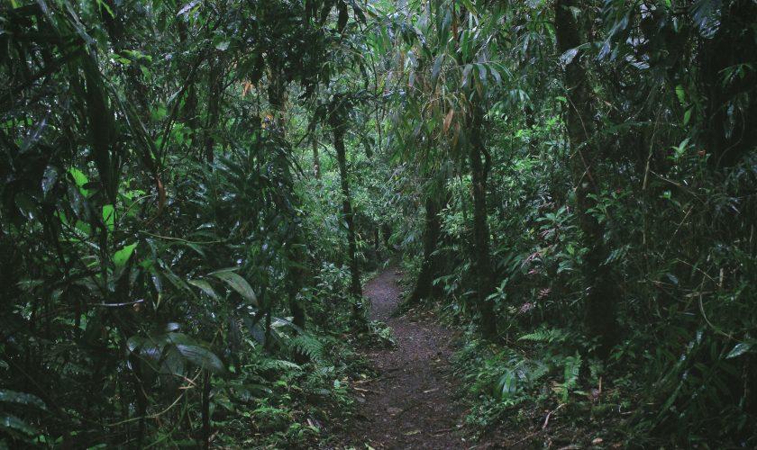 COSTARICA_Jungle_UNSPLASH_ruben-ramirez-478719