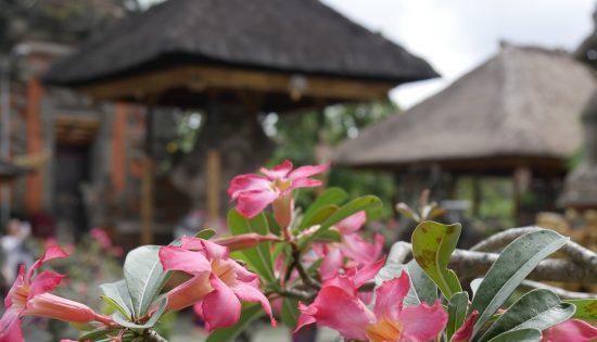 bali-fleurs