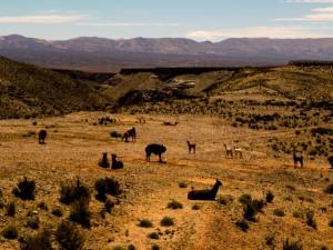 Plaines de l'Altiplano Argentin