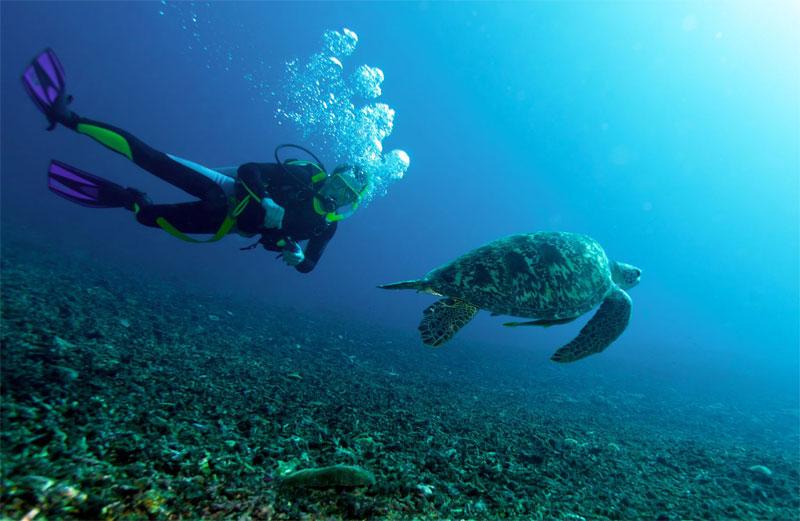 plongee-tortue