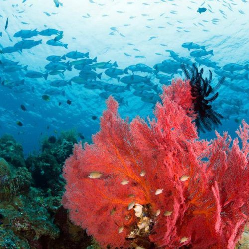 plongée et snorkeling WI