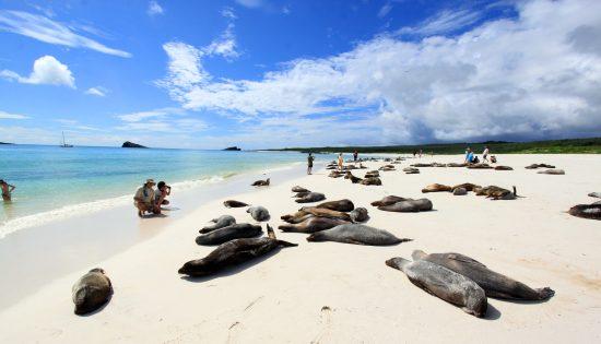 Galapagos_19_Interface tourisme