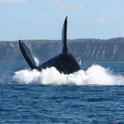 STEPHAN-Baleines