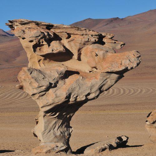 arbre de pierre (2)_Terra
