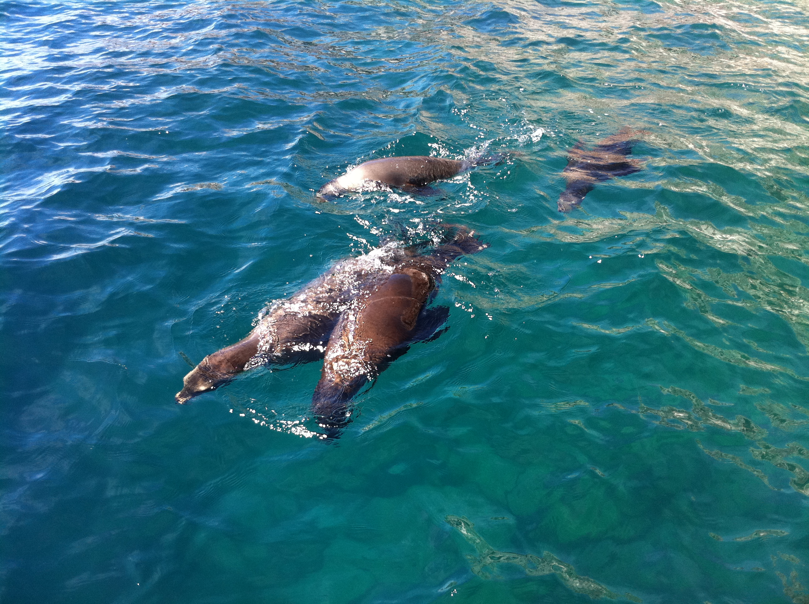 photo-faune-marine-mexique
