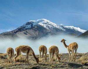Volcan Chimborazo - Equateur