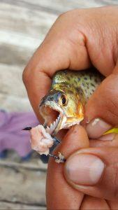 pêche piranha voyage sur-mesure colombie