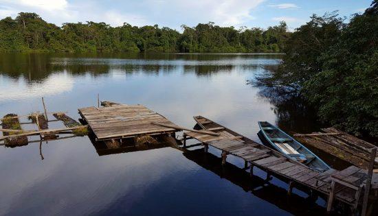 Amazonie-nenuphares