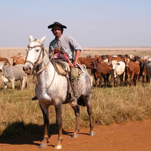 Gaucho dans la Pampa