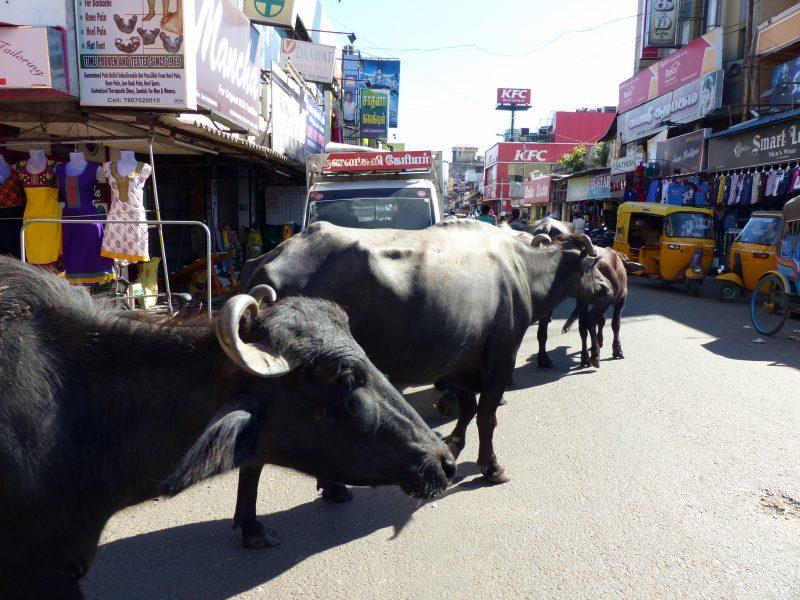 le quartier tamou à pondichéry