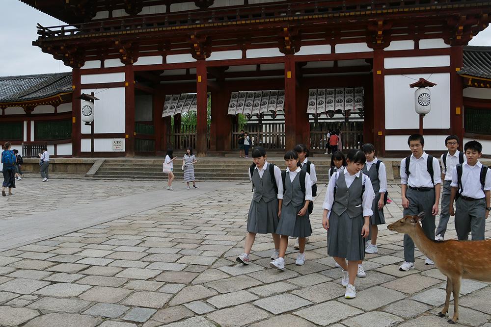 Des daims en liberté dans la ville de Nara