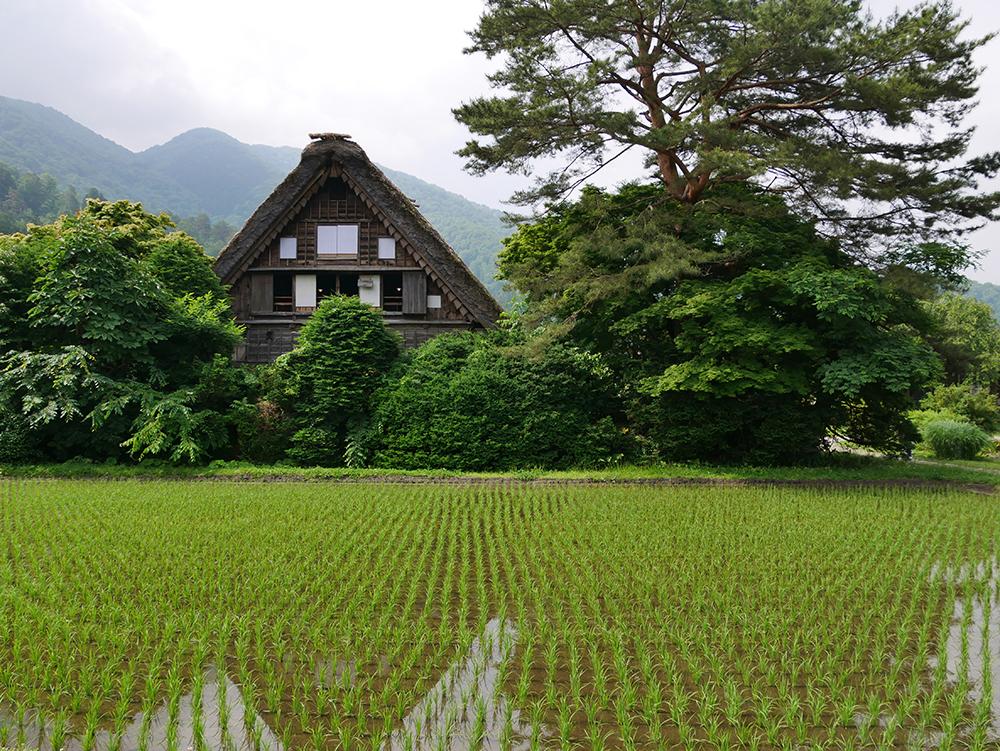 Shirakawa-go (rizières et maison de chaume)