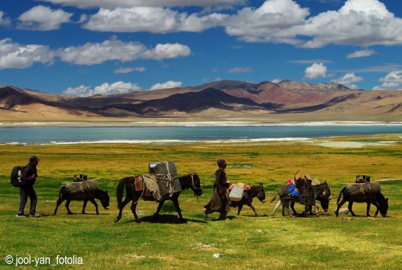 Nomades au Ladakh
