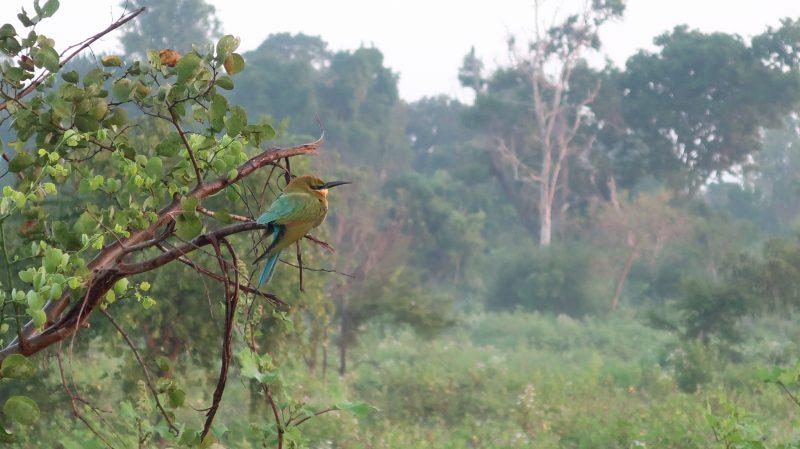 Le Sri Lanka allie avec beauté faune et flore