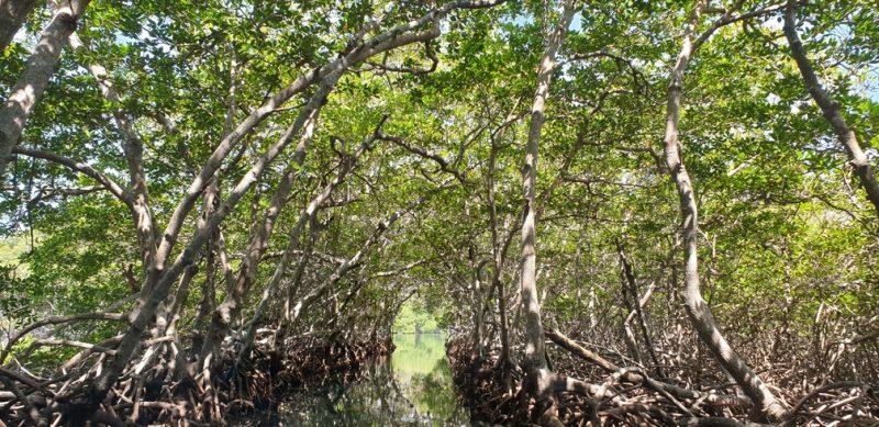 Tour manglares Roatan
