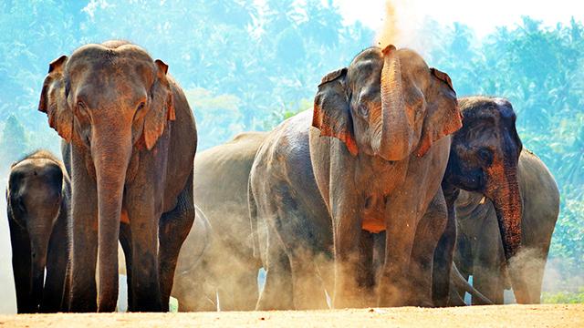 Voyage à Noël au Sri Lanka