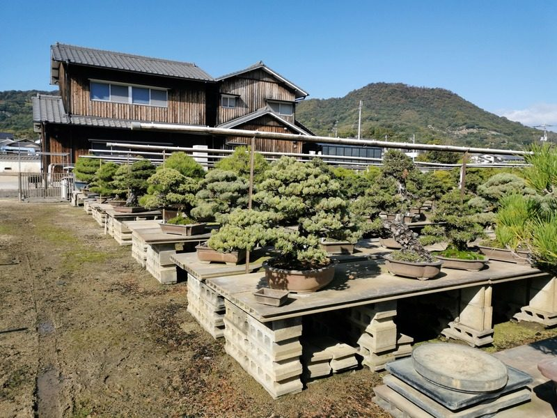 nakanishi-chinshoen-jardin-bonsai