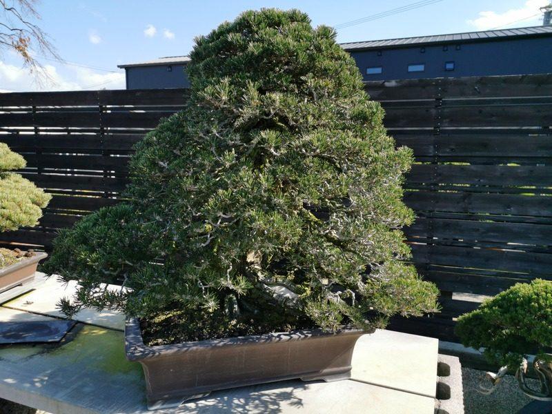 nakanishi-chinshoen-jardin-bonsai-plus-vieux