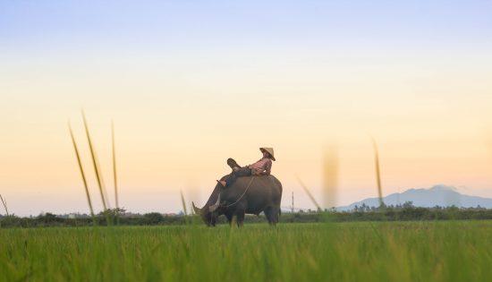 Hoi An_Vietnam_kiril-dobrev-1533392-unsplash