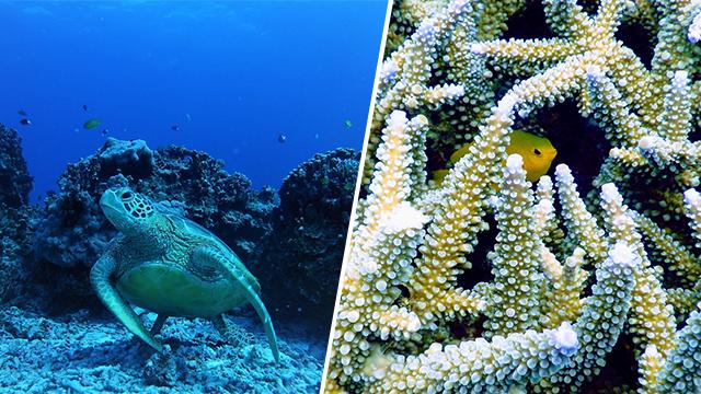 japon okinawa plongée tortue poissons