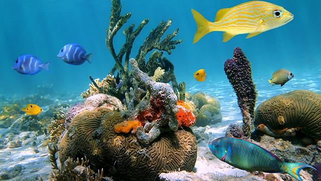 mexique costa maya fonds marins colorés