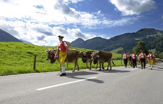Suisse Orientale - troupeau