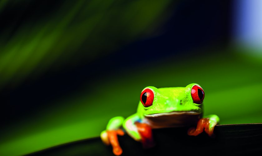 Frog on a leaf in the jungle