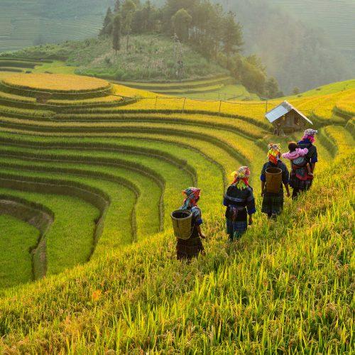 Rizière de Mu Cang Chai, Vietnam