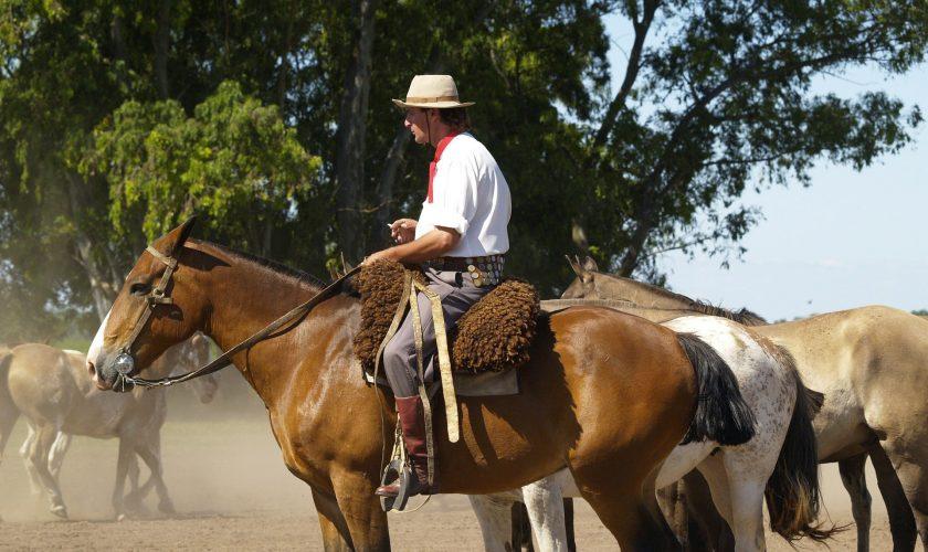 Gaucho_horses-52701_1920_ArtTower_pixabay
